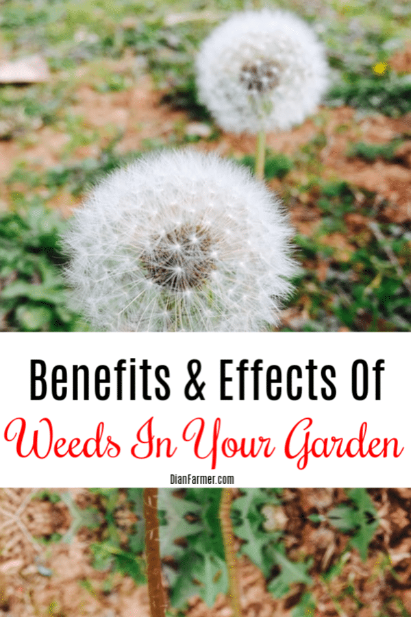 Benefits And Effects Of Weeds In Your Garden (1)