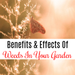 Benefits And Effects Of Weeds In Your Garden (3)