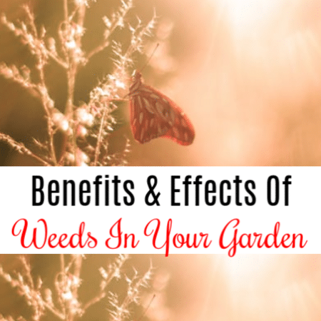 Benefits And Effects Of Weeds In Your Garden
