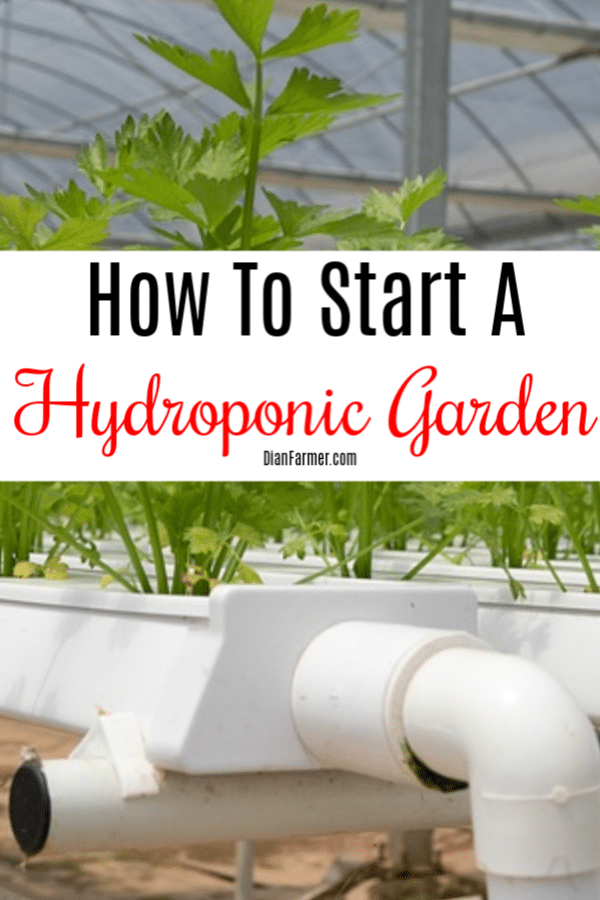 Hydroponics is an easy way to grow your own food.  Gardening hydroponically is not as hard as you may think.  Click through to find out how to start a hydroponic garden.