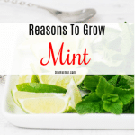 Reasons To Grow Mint (3)