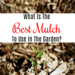 What Is The Best Mulch To Use In The Garden?