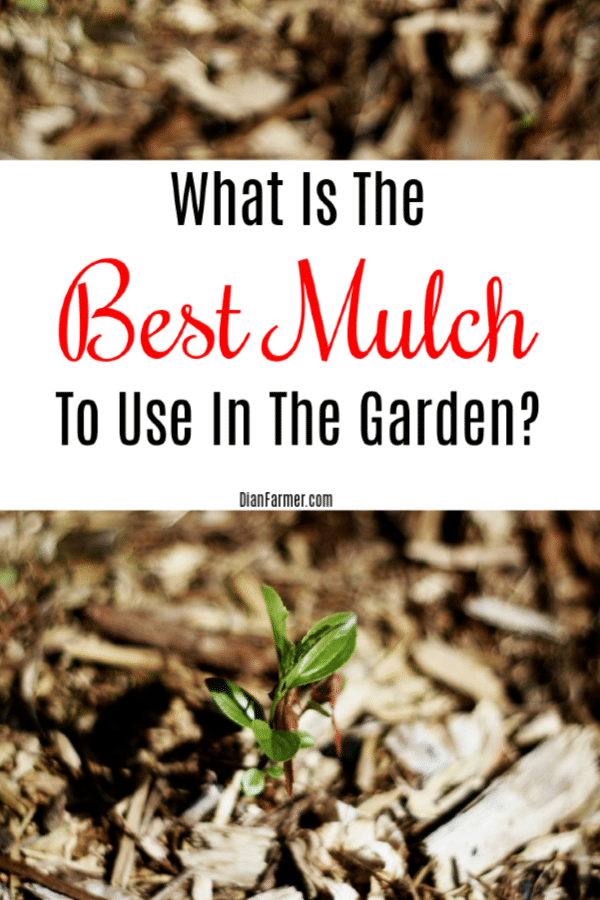 What is the best mulch to use in the garden? Have you ever asked that question? Well click through to see the options and pros and cons of each so you can make the best choice for your needs.
