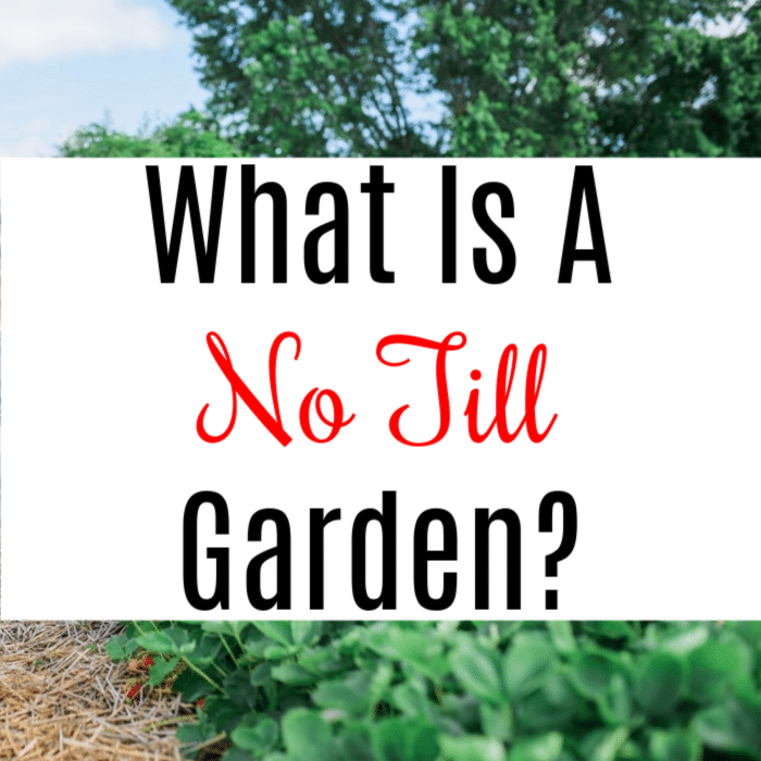 Have you thought about no till gardening but didn't know where to start?  Click through to learn more about what it is and how to get it going in your garden.