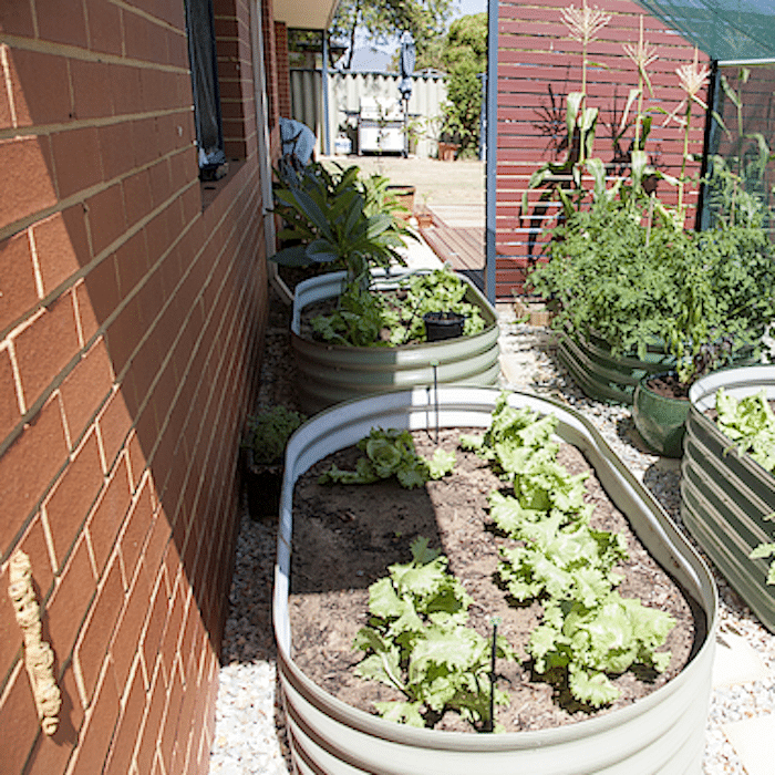 If you want to know more about what vegetables grow in the shade, or vegetable shade garden ideas, we have you covered!  Just click through to read more about shaded vegetable gardens...