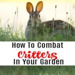 How To Combat Critters In Your Garden (2)