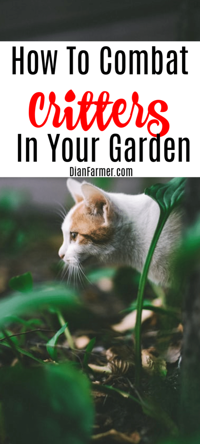 If you're trying to figure out How To Keep Critters Out Of The Garden, then you've come to the right place.  Just click through to read more....