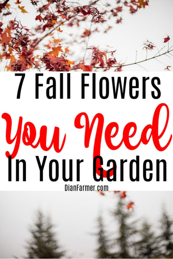 Looking to spruce up your fall flowers garden? No matter if you're looking to plant fall flower beds, fall flower pots, or fall flower boxes, be sure to include these fall flowers to plant  Click through to read more....