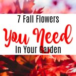7 Fall Flowers You Need In Your Garden