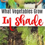 What Vegetables Grow Well In The Shade_