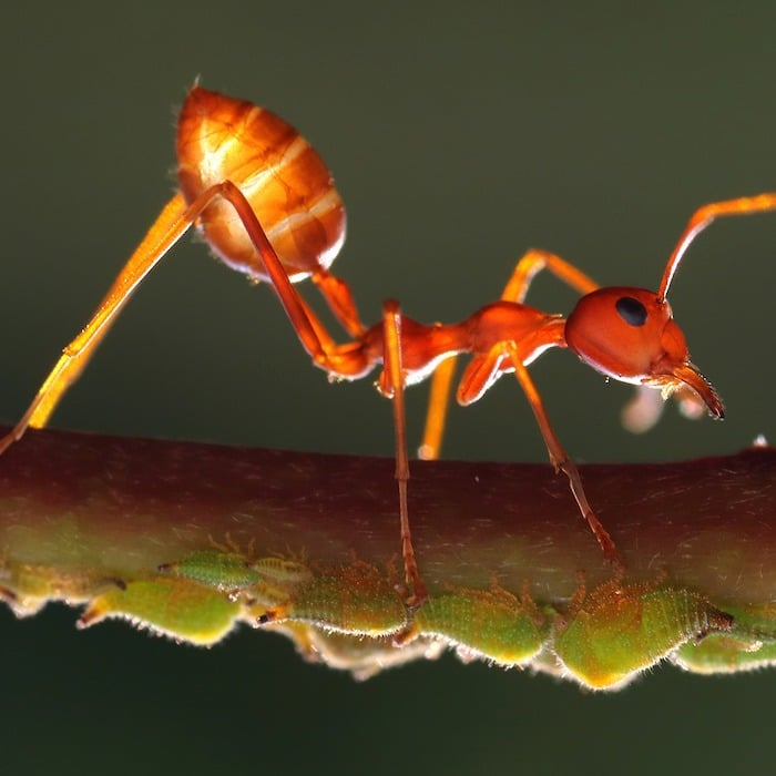 Are you having an issue with ants in your yard or garden?  Are you looking for ways to get <a href=