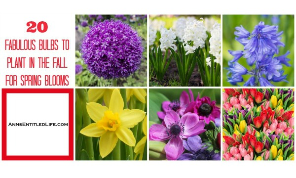 20-fabulous-bulbs-to-plant-in-the-fall-for-spring-blooms-horizontal.jpg