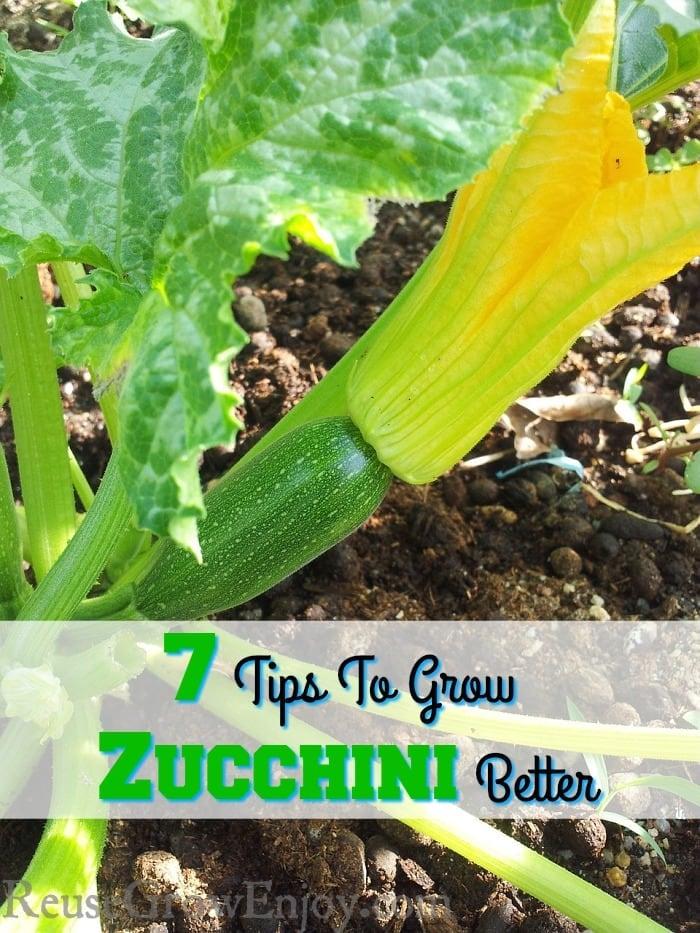 7-Tips-To-Grow-Zucchini-Better.jpg