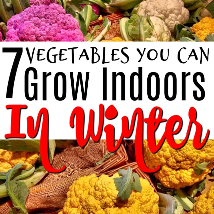 Do you want to know what  vegetables you can grow indoors in winter?  Just click through to find out now....