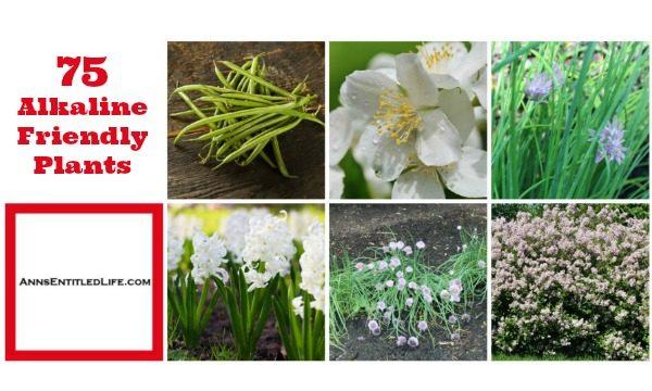 75 Alkaline Friendly Plants