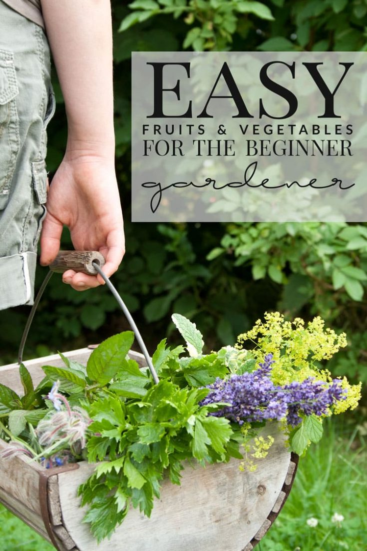 Easy Fruits and Vegetables for the Beginner Gardener