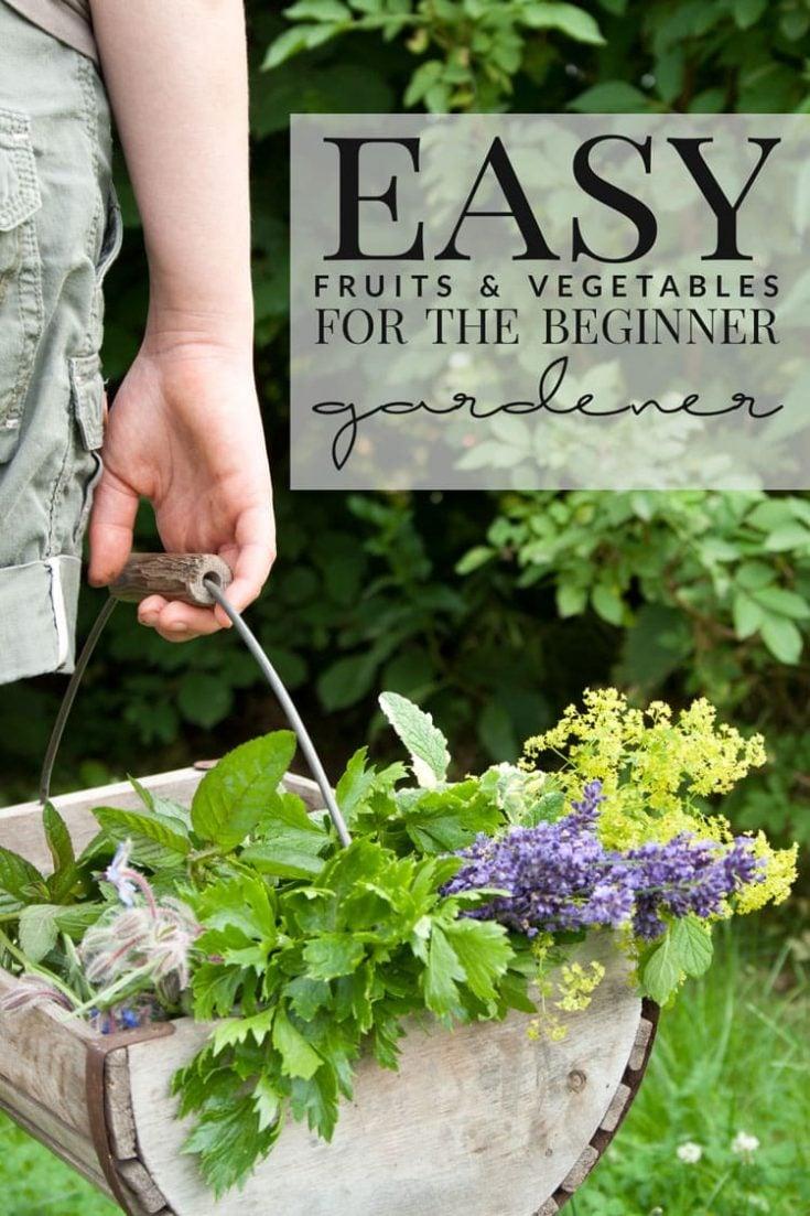 Easy-Fruits-and-Vegetables-for-the-Beginner-Gardener.jpg