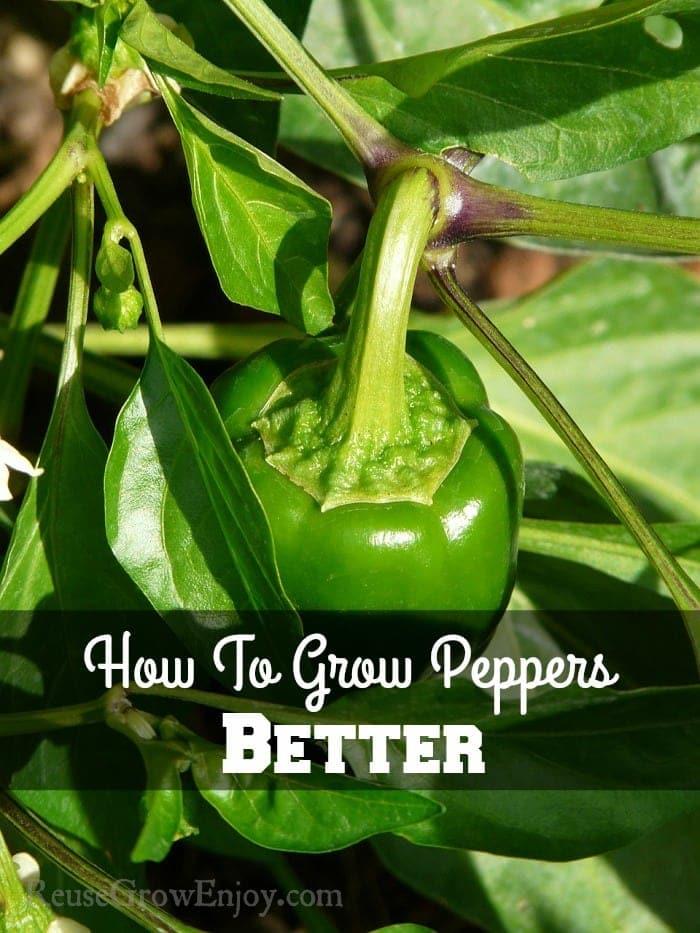 Grow-Peppers-Better.jpg