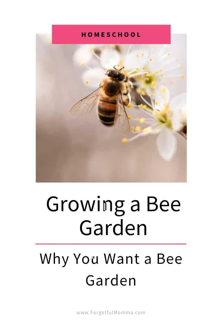 Growing-A-Bee-Garden-Why-You-Want-One.jpg