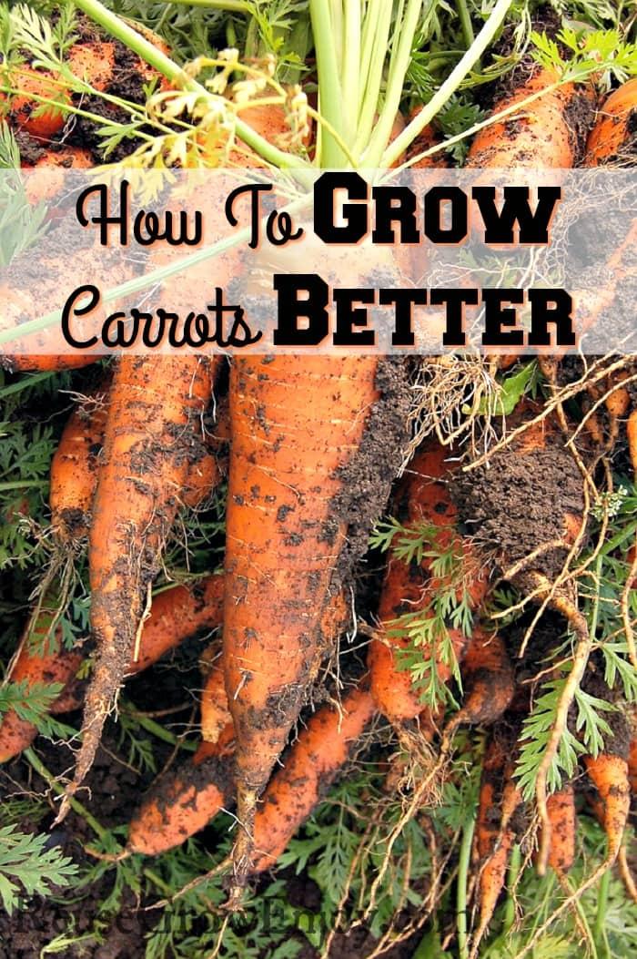 How-To-Grow-Carrots-Better.jpg