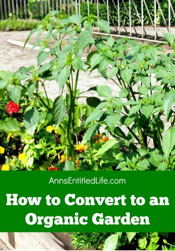 How to Convert to an Organic Garden