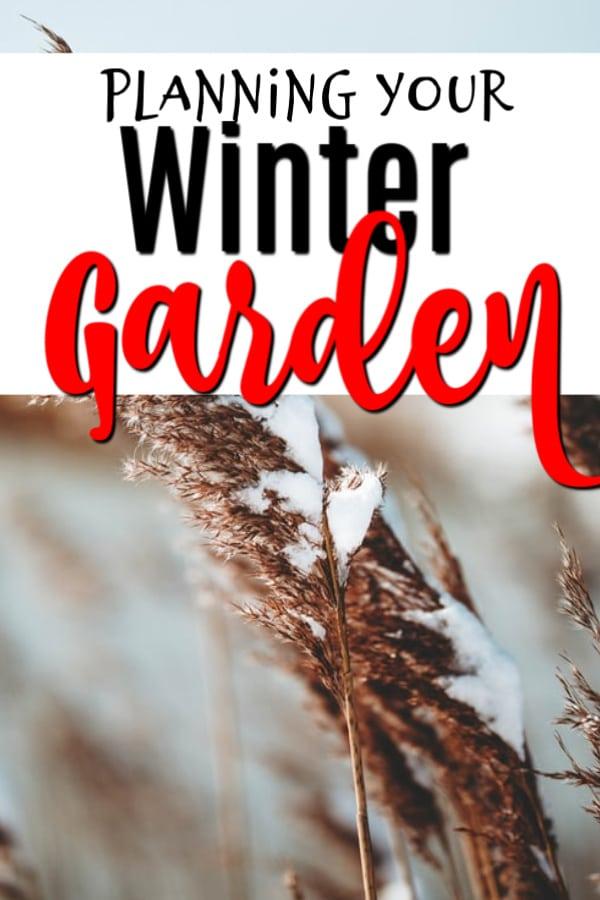 Planning Your Winter Garden