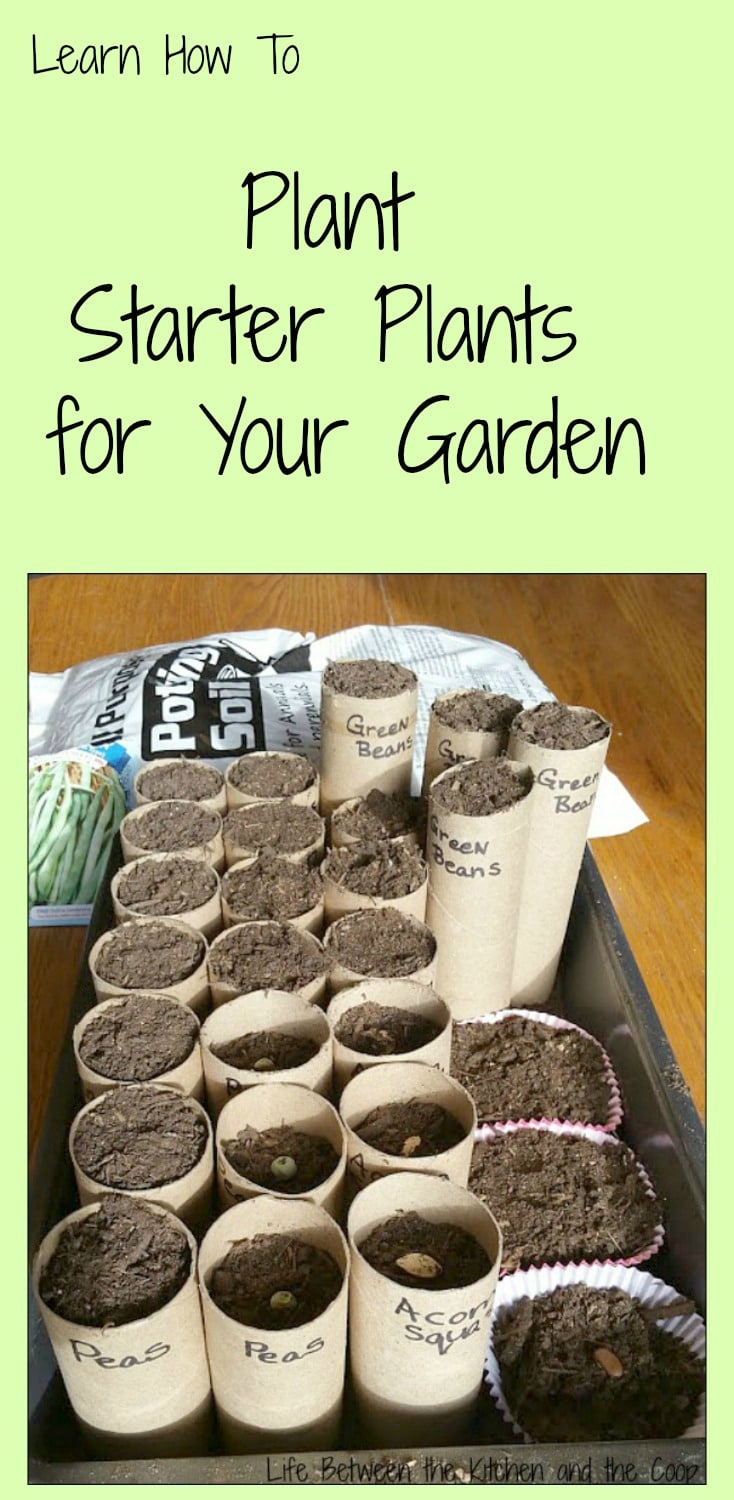 How to Plant Starter Plants for Your Garden