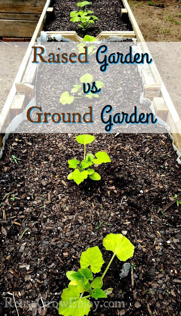 Raised Garden vs Ground Garden
