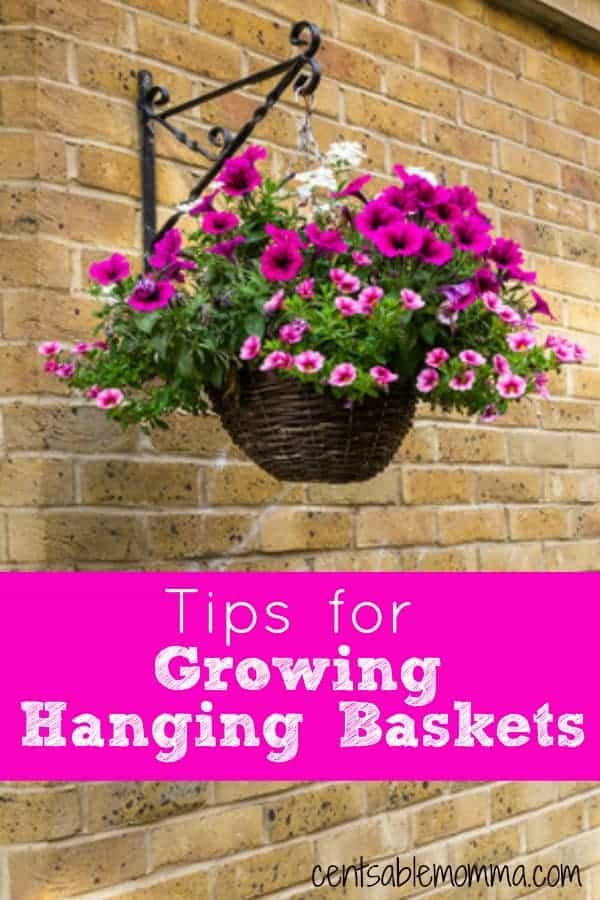 Tips-for-Growing-Hanging-Baskets-Edit.jpg