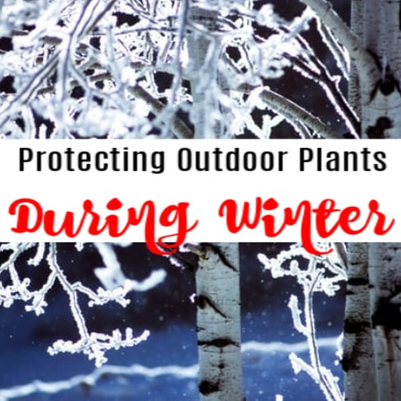 Protecting Outdoor Plants In The Winter