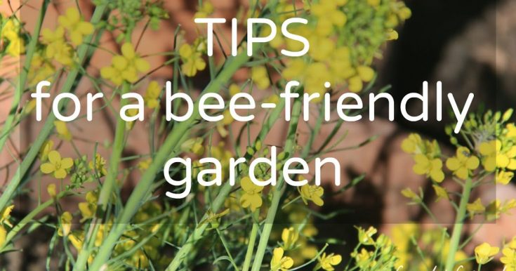 Simple tips for a bee-friendly garden