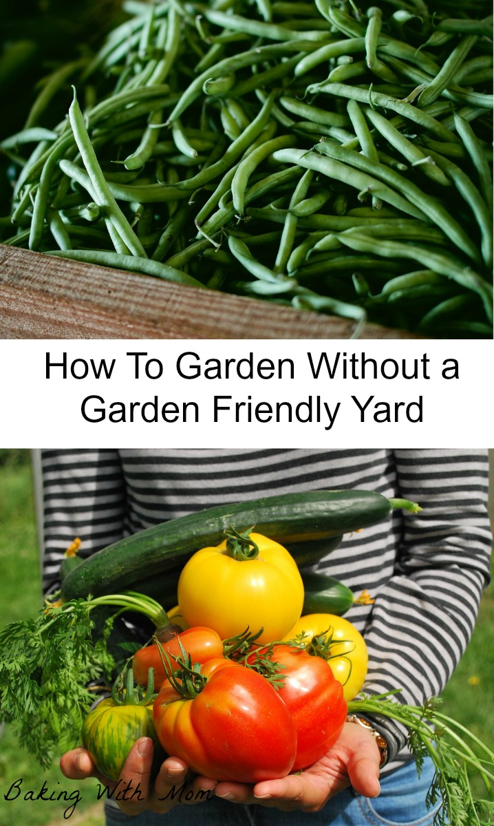 How To Garden Without A Garden Friendly Yard