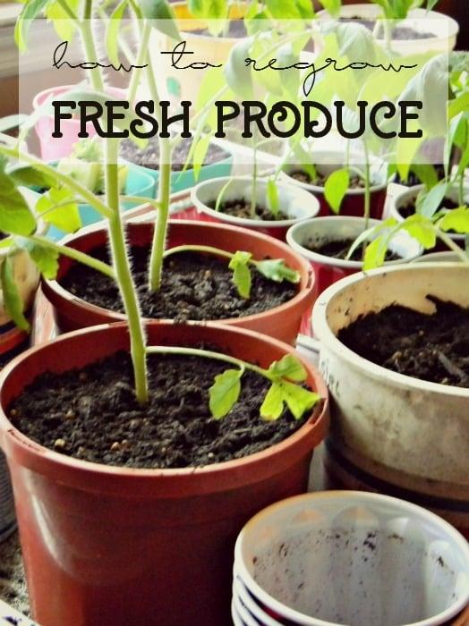 regrowfreshproduce.jpg