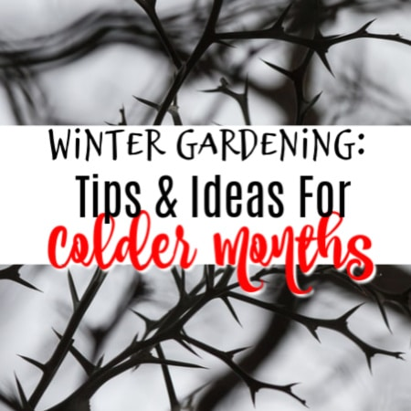 Winter Gardening:  Tips And Ideas For The Colder Months