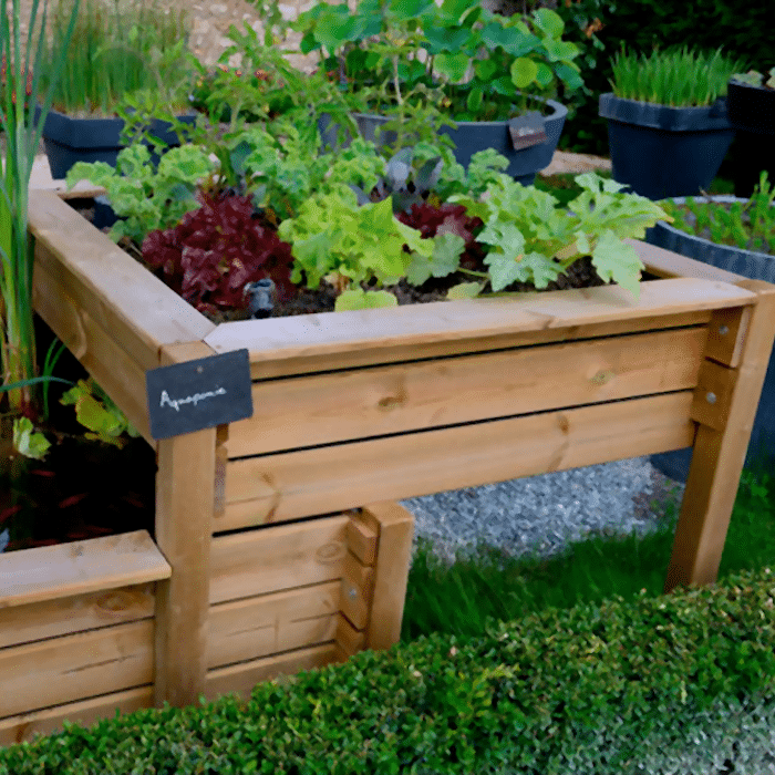 Wooden raised garden beds filled with greenery