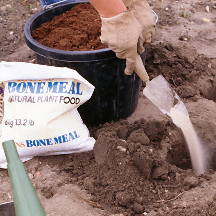 Bone meal being added to soil