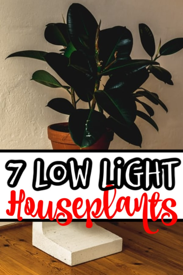 If you're looking to fill your indoor spaces with low light houseplants then click through to find out all you need to know...