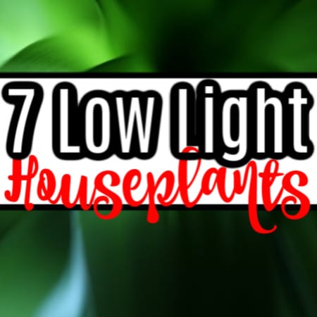 7 True Low Light Houseplants