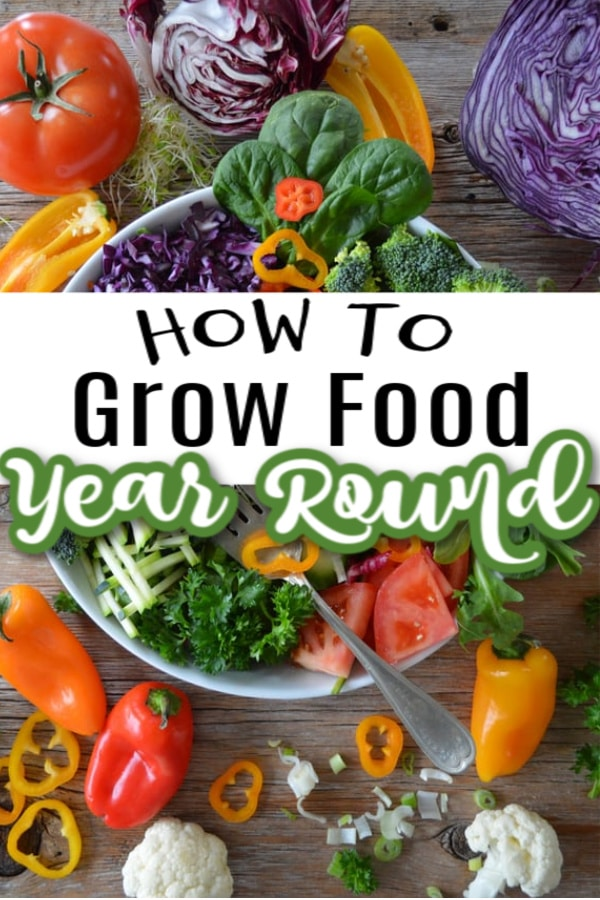 How To Grow Food Year Round From Your Own Family Food Garden