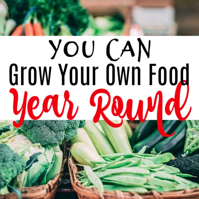 Want to grow food year round?  You can!  Harvest and eat straight from your own garden all year. Click through to find out how...