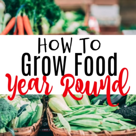How To Grow Food Year Round (3)
