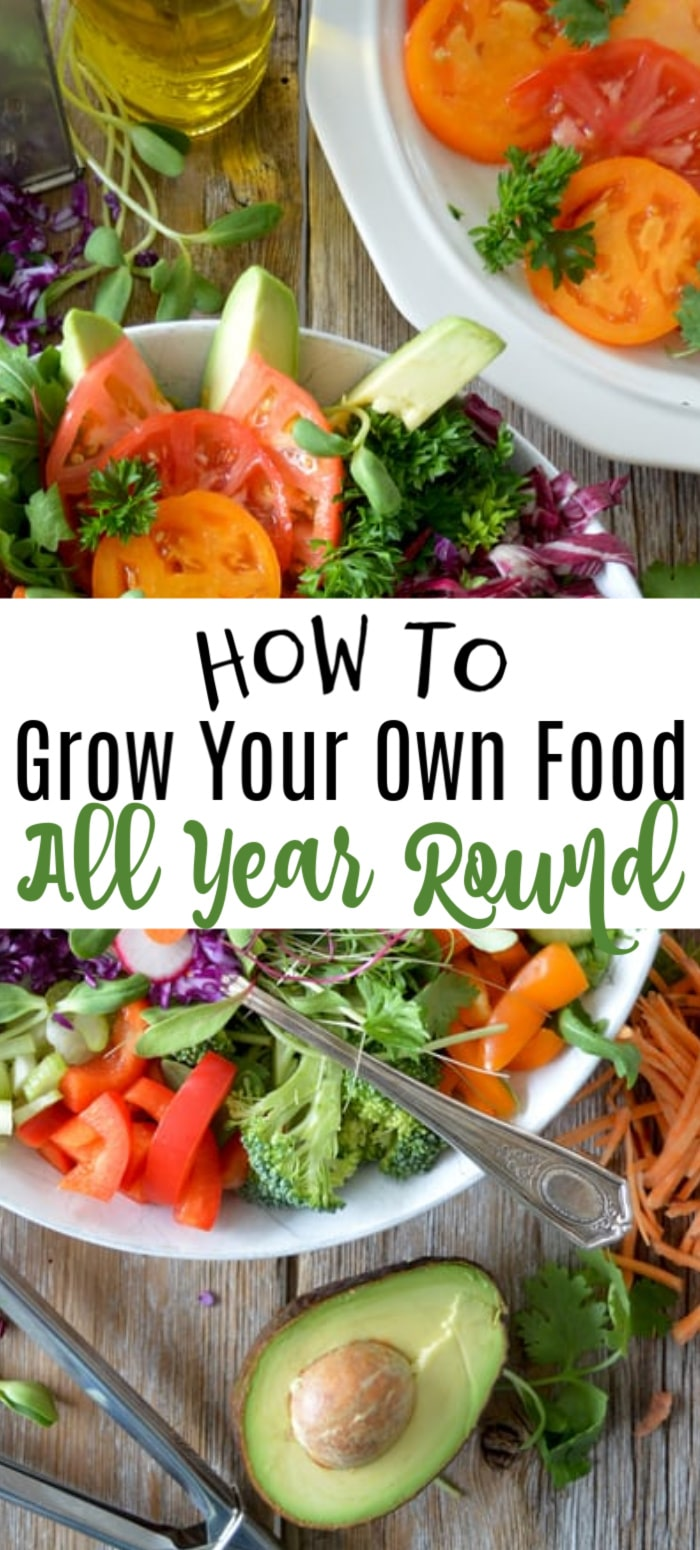 Want to grow your own food year round?  You can!  Harvest and eat straight from your own garden all year. Click through to find out how...