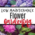 Low Maintenance Flower Gardening Year Round