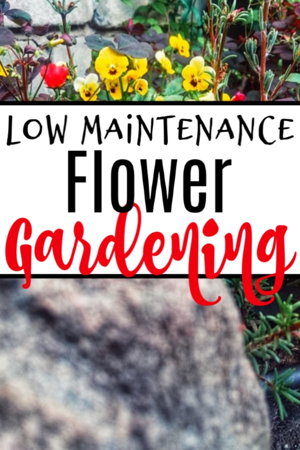 Low Maintenance Flower Gardening