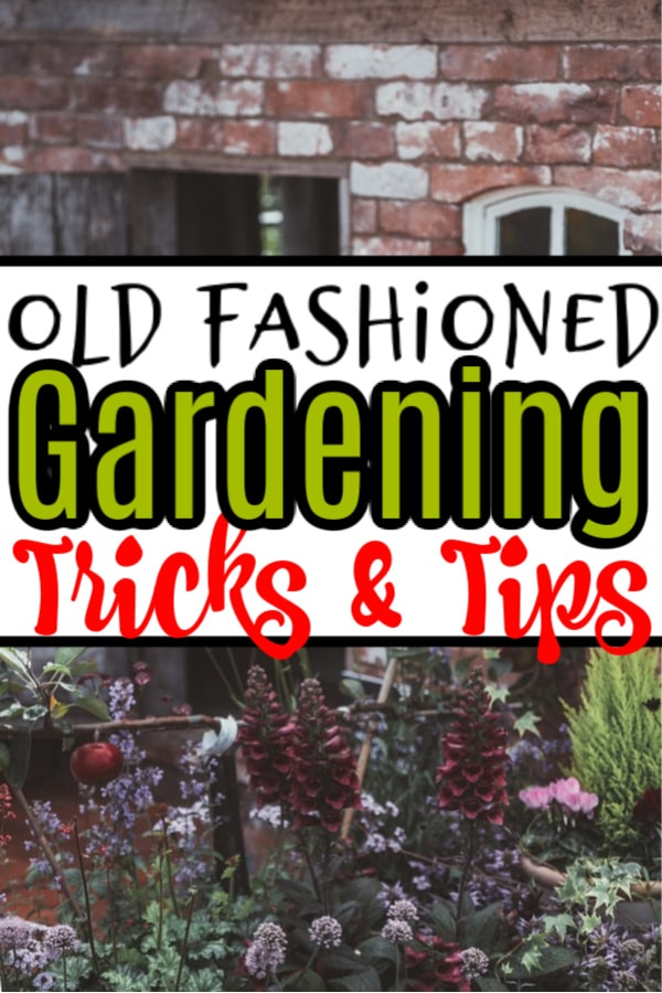 Old Fashioned Gardening Tips & Tricks