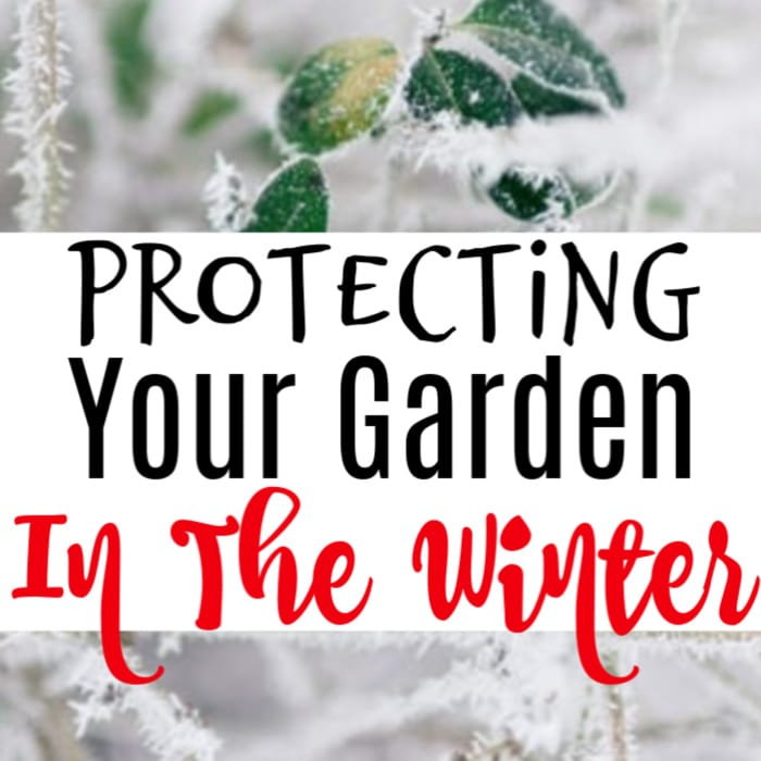 If you're looking for ways to protect your garden in the winter, these tools are definitely going to help.  Click through to check it out, now...