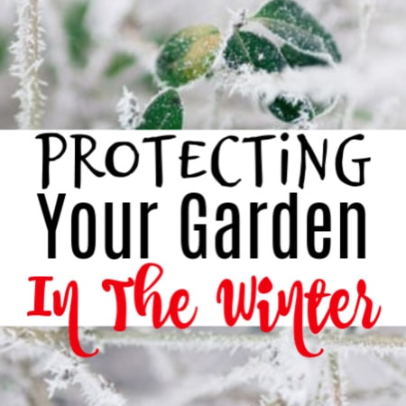 Protecting Your Garden In The Winter