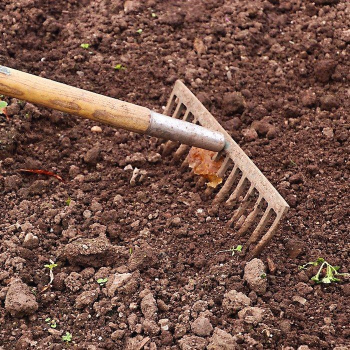 Hoe raking through garden soil