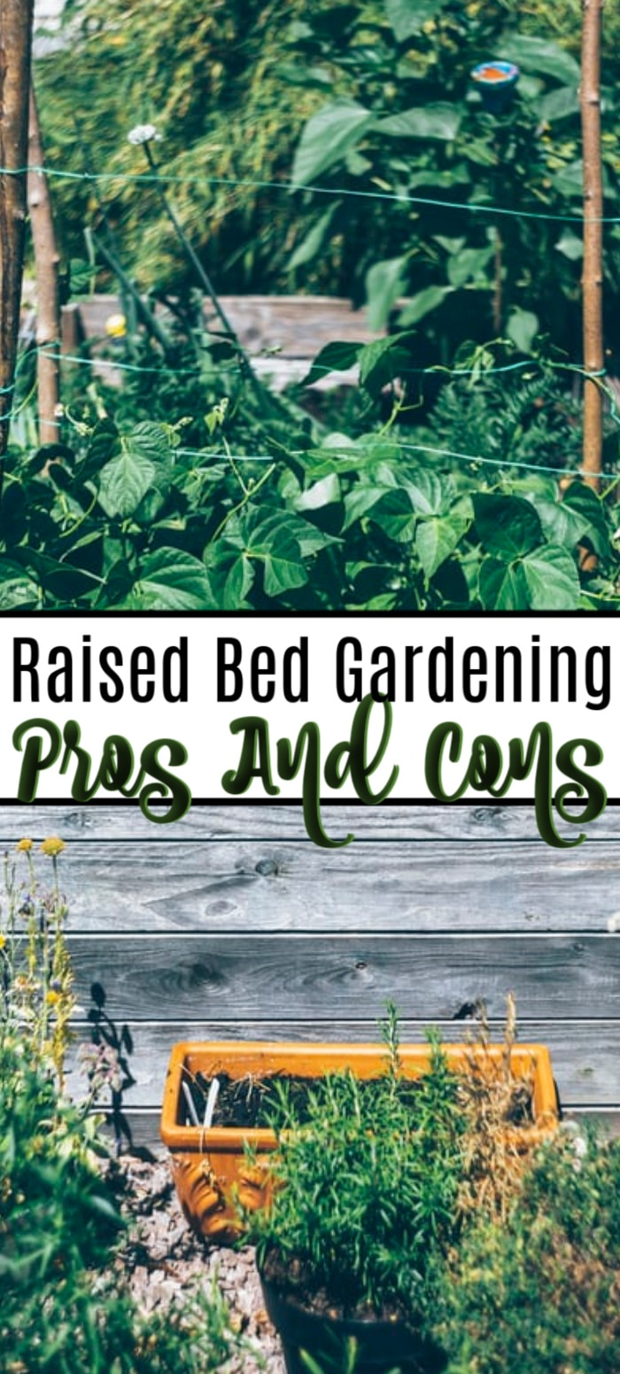 Raised bed gardens are all the rage. But are they really better? Click through NOW to check out the pros and cons of raised bed gardening...