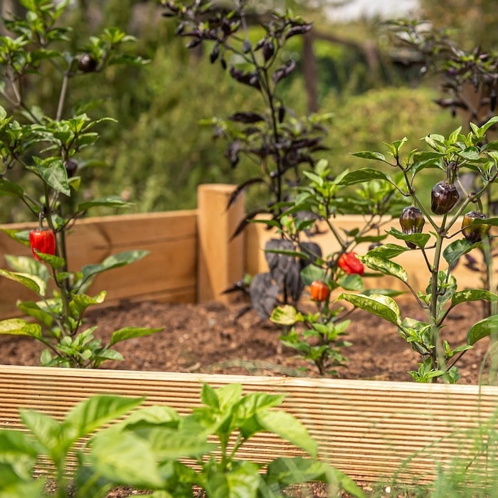 Raised Bed Gardening is all the rage.  be sure you're aware of these 7 mistakes so you don't make them.  Click through NOW to find out what they are...
